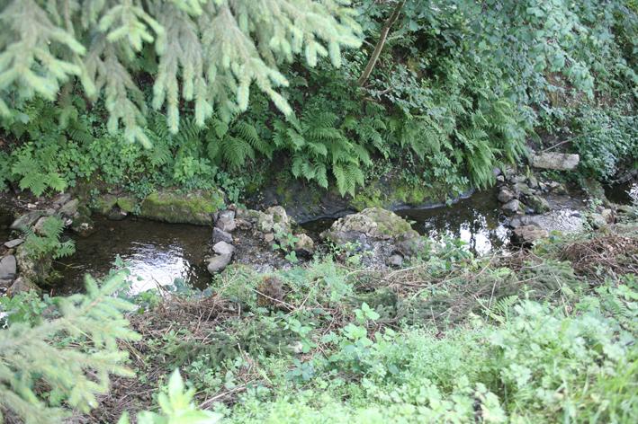 Etang et ruisseau